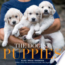 The Dogist Puppies