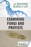 Examining Fungi And Protists