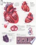 The Heart, Laminated Chart
