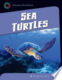 Sea Turtles Book
