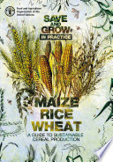Save and Grow in practice: maize, rice, wheat