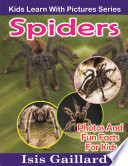 Spiders: Photos and Fun Facts for Kids