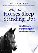 Why Do Horses Sleep Standing Up