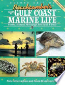 Beachcomber's Guide to Gulf Coast Marine Life  : Florida, Alabama, Mississippi, Louisiana & Texas