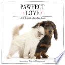 Pawfect Love