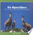 Die Alpen-Gämse  : ein Leben auf Gratwanderung