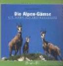 Die Alpen-Gämse: ein Leben auf Gratwanderung