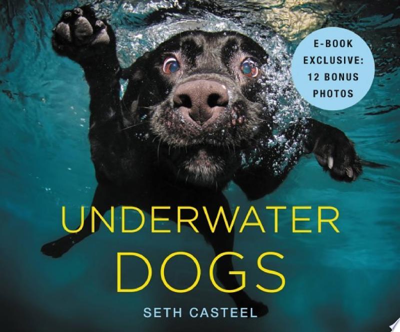 Underwater Dogs banner backdrop