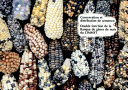 Wheat Production Constraints in Tropical Environments
