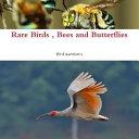 Rare Birds  Bees and Butterflies