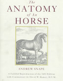 The Anatomy of an Horse
