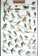 Mac's Field Guide To Southern California Park and Garden Birds