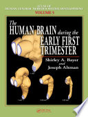 The Human Brain During the Early First Trimester