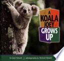 A Koala Joey Grows Up