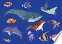 River fish notes