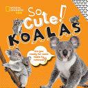 So Cute  Koalas