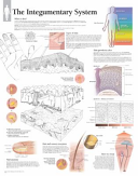 The Integumentary System Book PDF