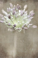 Allium Whispers Journal  Notebook  Or Diary  Flowers  Garden  Blooms    Blank Lined  6 X 9 Inches  150 Pages