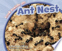 Look Inside an Ant Nest