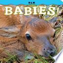 Elk Babies