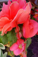 Pretty Summer Flowers Journal