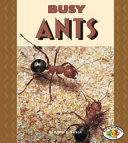 Busy Ants