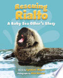 Rescuing Rialto  A Baby Sea Otter s Story