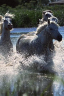 2020 Daily Planner Horse Photo Equine Ponies Crossing Water 388 Pages