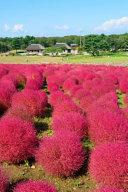 Autumn in Hitachi Seaside Park Japan Journal