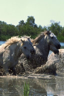 2020 Daily Planner Horse Photo Equine Horses Crossing Water 388 Pages