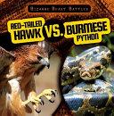 Red Tailed Hawk vs  Burmese Python