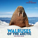 Walruses of the Arctic