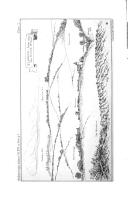 الصفحة xlii