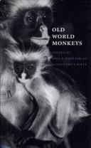 Old World Monkeys