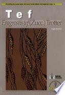 Tef - Eragrostis Tef (Zucc.)