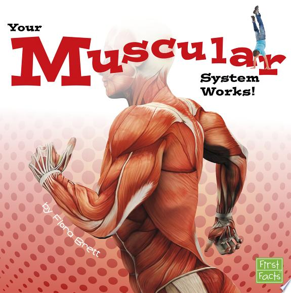 Your Muscular System Works!