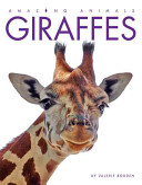 Amazing Animals Giraffes