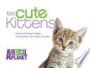 Too Cute Kittens