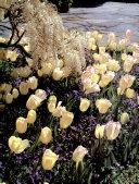 The Practical Gardener's Encyclopedia
