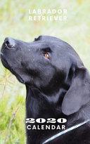Labrador Retriever 2020 Calendar