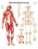 Musculoskeletal  Paper Chart