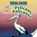 Pelicans / Pelícanos