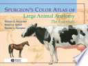 Spurgeon's Color Atlas of Large Animal Anatomy
