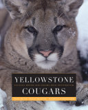 Yellowstone Cougars Pdf