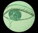 Tears on the Rose Pdf/ePub eBook