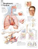 Respiratory System  Laminated Chart