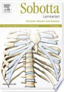 Knochen, Bänder und Gelenke