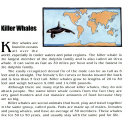 Discover Killer Whales Vol 2