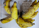 Morphological  molecular and biochemical characterization of selected banana varieties in Kerala and evaluation of their anticancer activities  an overview