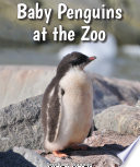 Baby Penguins at the Zoo